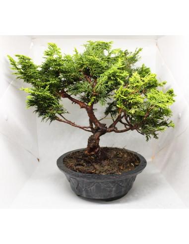 Duża CERAMICZNA DONICA na bonsai...